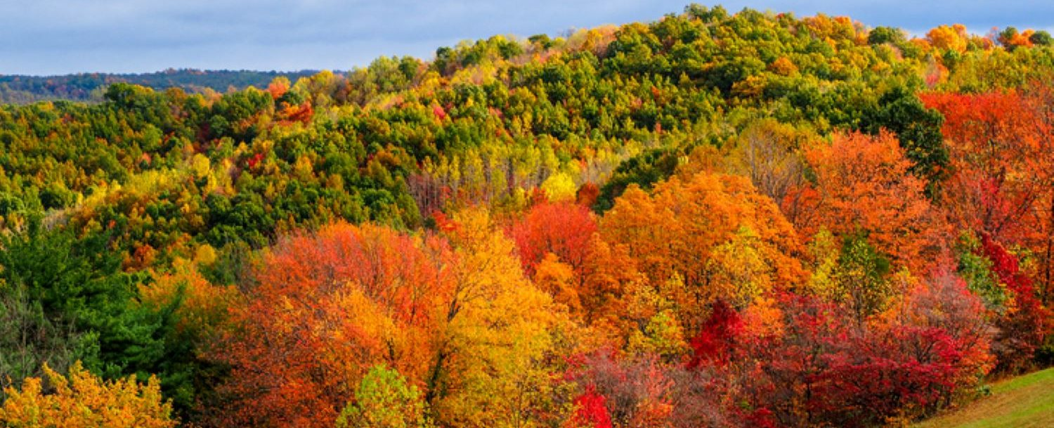 How to Fall in Love With the Texas Hill Country Fall Colors